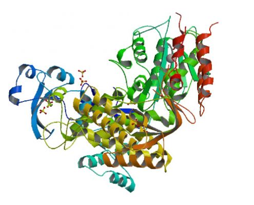 Insight in DNA Replication: The crystal structure of DNA Polymerase B1 from the archaeon Sulfolobus solfataricus.