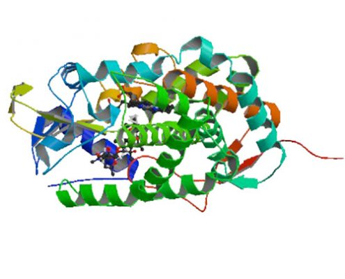 Investigating the structural plasticity of a Cytochrome P450 EryK: three-dimensional structures of P450 EryK and binding to its physiological substrate.